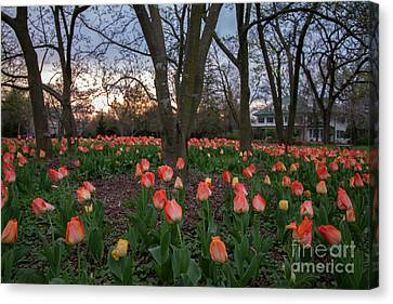 Canvas Print featuring the photograph Dusk At Sherwood Gardens by Chris Scroggins