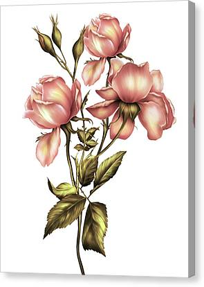 Floral Canvas Print - Dusky Peach Roses On White by Georgiana Romanovna