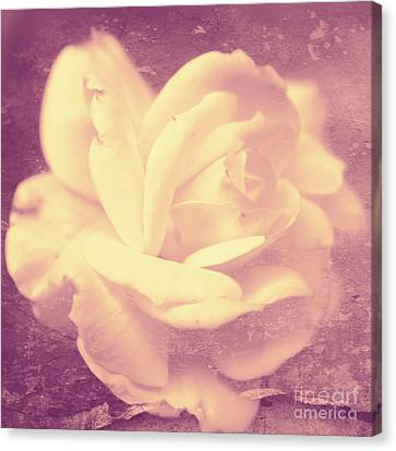 Floral Canvas Print - Dusky Pink by Clare Bevan