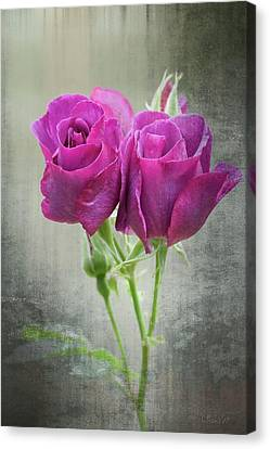 Dusty Roses Canvas Print