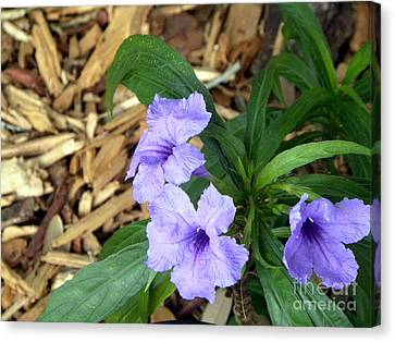 Canvas Print featuring the photograph Dwarf Mexican Petunias by Terri Mills