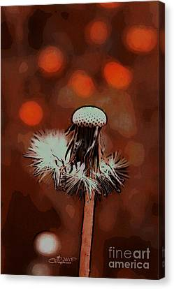 Dying Blowball Canvas Print by Jutta Maria Pusl