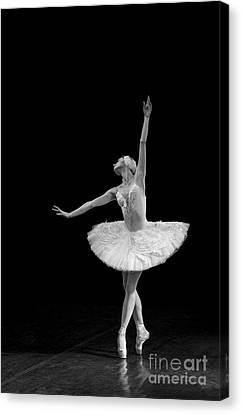 Young St. Clare Canvas Print - Dying Swan 9 Alternative Size by Clare Bambers