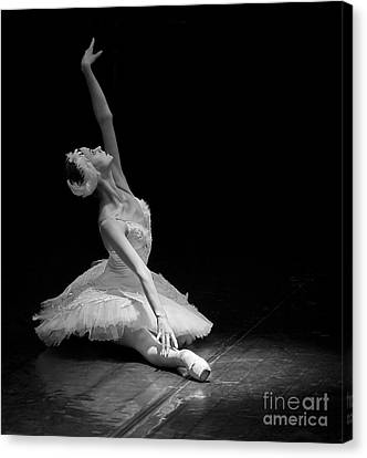 Dying Swan II. Canvas Print