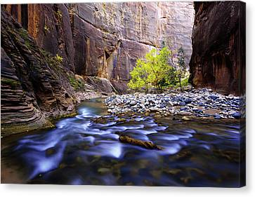 Canvas Print featuring the photograph Dynamic Zion by Chad Dutson