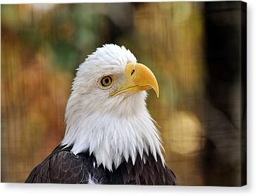 Eagle 9 Canvas Print by Marty Koch