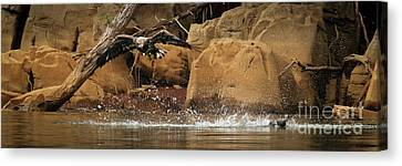 Canvas Print featuring the photograph Eagle Attack by Douglas Stucky