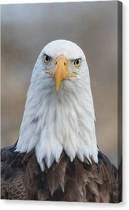 Canvas Print featuring the photograph Eagle Attitude by Angie Vogel