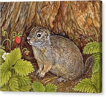 Eagle Creek Wild Strawberry Ground Squirrel Canvas Print by Ditz