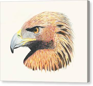 Raptor Canvas Print - Eagle Eye  No Border by Stephanie Grant