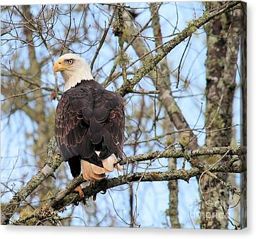 Canvas Print featuring the photograph Eagle Eye On You  by Debbie Stahre
