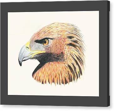 Raptor Canvas Print - Eagle Eye by Stephanie Grant