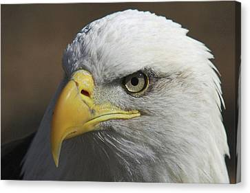 Canvas Print featuring the photograph Eagle Eye by Steve Stuller