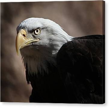 Canvas Print featuring the photograph Eagle Eyed by Marie Leslie