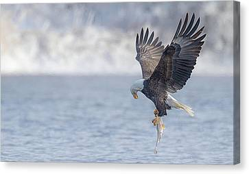 Eagle Fishing  Canvas Print