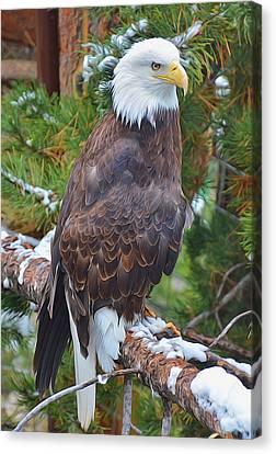 Eagle Glory Canvas Print
