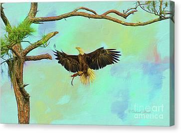 Eagle Grace Canvas Print by Deborah Benoit