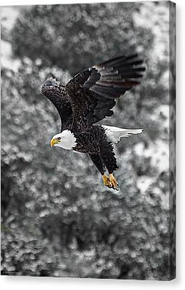 Canvas Print featuring the photograph Eagle In Flight by Britt Runyon
