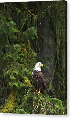 Eagle In The Woods Canvas Print