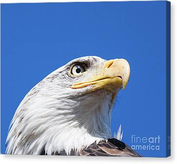 Canvas Print featuring the photograph Eagle by Jim  Hatch