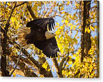 Canvas Print featuring the photograph Eagle Launch by Angel Cher