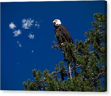 Eagle Canvas Print by Leland D Howard