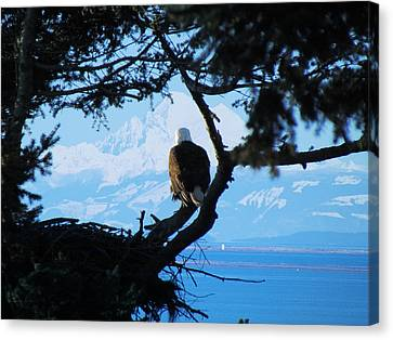 Eagle - Mt Baker - Eagles Nest Canvas Print