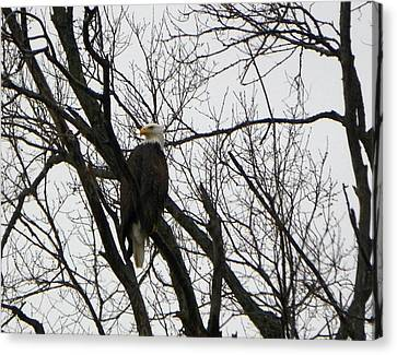 Appleton Canvas Print - Eagle On Old Dump Road by Tammy Miller
