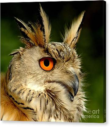 Eagle Canvas Print - Eagle Owl by Jacky Gerritsen