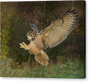Eagle-owl Wings Back Canvas Print by CR Courson
