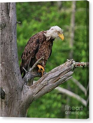 Canvas Print featuring the photograph Eagle Point Of View by Debbie Stahre