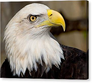 Eagle Power Canvas Print by William Jobes