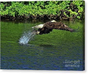 Canvas Print featuring the photograph Eagle Series Fish Catch by Deborah Benoit