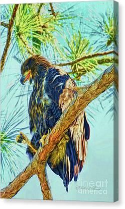 Eagle Series Leaving Soon Canvas Print by Deborah Benoit