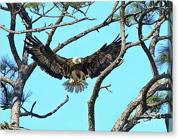 Canvas Print featuring the photograph Eagle Series Wings by Deborah Benoit