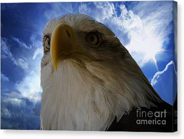 Eagle Canvas Print by Sherman Perry