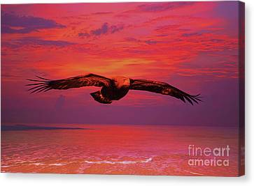Eagle Sundown Canvas Print by Deborah Benoit