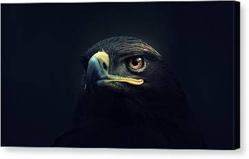 Eagle Canvas Print - Eagle by Zoltan Toth