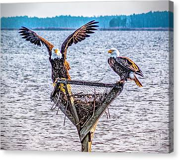 Canvas Print featuring the photograph Eagles In Blackwater Refuge by Nick Zelinsky