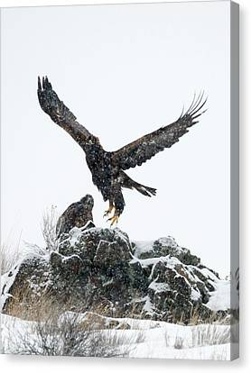 Winter Storm Canvas Print - Eagles In The Storm by Mike Dawson