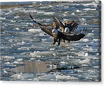 Eagles On Ice Canvas Print