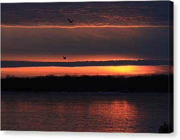 Eagles Over The Mississippi Canvas Print by Dave Clark