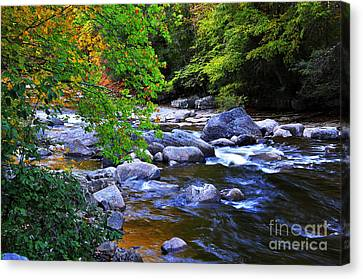 Early Autumn Along Williams River Canvas Print by Thomas R Fletcher