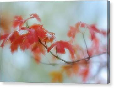 Canvas Print featuring the photograph Early Autumn by Diane Alexander