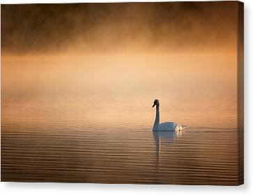 Early Bird 2015 Canvas Print