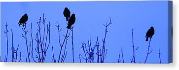 Canvas Print featuring the photograph Early Birds by Mark Blauhoefer