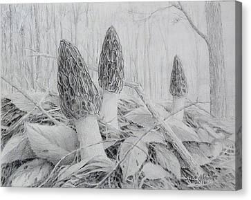 Early May Morchella  Canvas Print by Steve Mountz