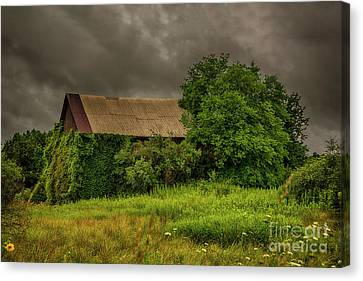 Early Monring Rain Canvas Print