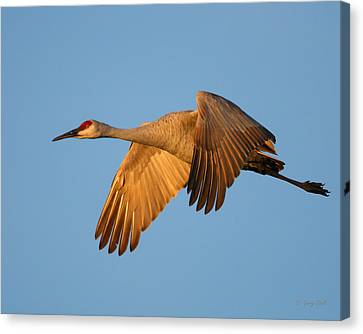 Canvas Print featuring the photograph Early Morning Flight by Gerry Sibell