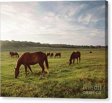 Early Morning Graze Canvas Print by A New Focus Photography